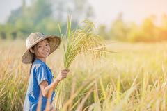Asian children farmer on yellow rice field Royalty Free Stock Image