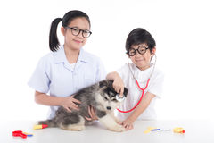 Asian children playing veterinarian with siberian husky puppy stock photo