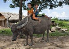 Asian Children Ride On Water Buffalo Royalty Free Stock Photo