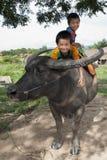 Asian Children Ride On Water Buffalo Royalty Free Stock Image