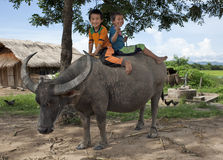 Asian children ride on water buffalo