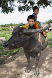 Asian children ride on water buffalo Royalty Free Stock Image