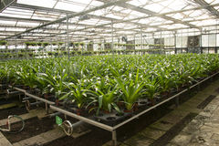 Asian China, Beijing, geothermal Expo Garden, greenhouse Stock Images