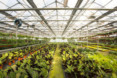 Asian China, Beijing, geothermal Expo Garden, greenhouse Stock Image