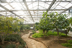 Asian China, Beijing, geothermal Expo Garden, greenhouse Stock Photography