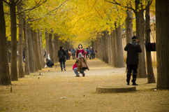 Asian China, Beijing, ginkgo landscape Avenue royalty free stock photos