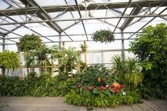 Asian China, Beijing Grand View Garden flowers, greenhouse Stock Photography