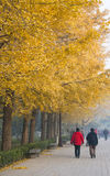 Asian China, Beijing, Linglong Park, ginkgo tree Stock Image