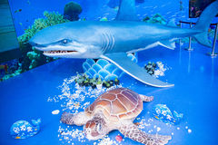 Asian China, Beijing, marine museum,Turtles and sharks, model Stock Photography