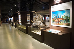 Asian China, Beijing, Museum of ancient animal,Indoor exhibition hall, Stock Images