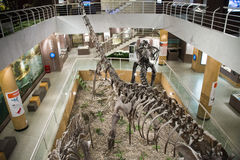 Asian China, Beijing, Museum of ancient animal,Indoor exhibition hall, Stock Photography