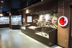 Asian China, Beijing, Museum of ancient animal,Indoor exhibition hall, Royalty Free Stock Photography