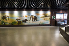 Asian China, Beijing, Museum of ancient animal,Indoor exhibition hall, Royalty Free Stock Images