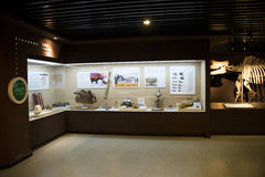 Asian China, Beijing, Museum of ancient animal,Indoor exhibition hall, Royalty Free Stock Photos