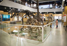 Asian China, Beijing, Museum of ancient animal,Indoor exhibition hall, Stock Photos