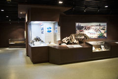 Asian China, Beijing, Museum of ancient animal,Indoor exhibition hall, fossil Royalty Free Stock Photos