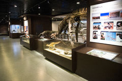 Asian China, Beijing, Museum of ancient animal,Indoor exhibition hall, fossil Stock Photography