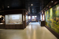 Asian China, Beijing, Museum of ancient animal,Indoor exhibition hall, Royalty Free Stock Photo