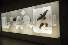 Asian China, Beijing, National Animal Museum� Stock Photography
