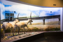 Asian China, Beijing, National Animal Museum� Royalty Free Stock Photos