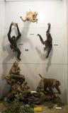 Asian China, Beijing, National Animal Museum�Animal specimens Stock Photo