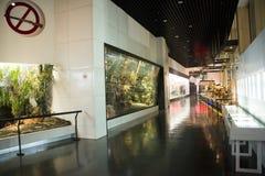 Asian China, Beijing, National Animal Museum Royalty Free Stock Photos