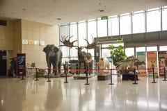 Asian China, Beijing, National Animal Museum Stock Photography