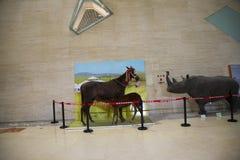 Asian China, Beijing, National Animal Museum Royalty Free Stock Photo