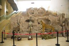 Asian China, Beijing, National Animal Museum Royalty Free Stock Photography
