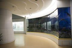 Asian China, Beijing, National Animal Museum Stock Images