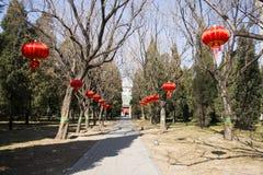 Asian China, Beijing, Yuetan Park, tree, red lanterns Stock Images