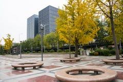 Asian Chinese, Beijing, Financial Street, garden, round stone chair, ginkgo tree Stock Image