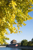 Asian Chinese, Beijing, historic buildings, the Imperial Palace watchtower, moat, ginkgo leaves Royalty Free Stock Images