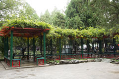 Asian Chinese, Beijing, the Summer Palace, green rattan and wood shed Royalty Free Stock Photo