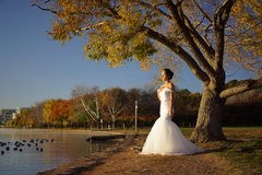Asian chinese bride in wedding gown in nature Royalty Free Stock Image
