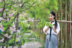 Asian Chinese Happy young cute adorable lovely student youth in a park garden outdoor in summer smell rose royalty free stock image