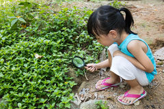 Asian Chinese little girl exploring grass with magnifying glass Stock Images