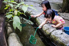 Asian Chinese Little Girls Fishing With Scoop Net At Pond Royalty Free Stock Photo