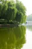 Asian Chinese, park, willow, bridge Stock Image