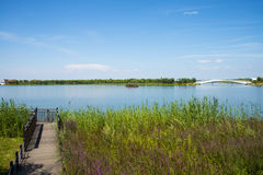 Asian Chinese, Tianjin Wuqing, Green Expo, Lakeview, wooden bridge Royalty Free Stock Photos