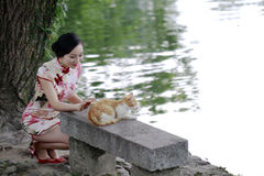 Asian Chinese woman in traditional cheongsam play with a cat royalty free stock image
