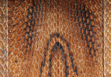Asian cobra leather texture Royalty Free Stock Images