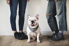 Asian couple with French bulldog Royalty Free Stock Photos