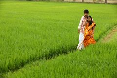 Asian couple in a paddy field Stock Image