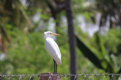 Asian crane Royalty Free Stock Photo