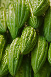 Asian cucumbers Royalty Free Stock Photo