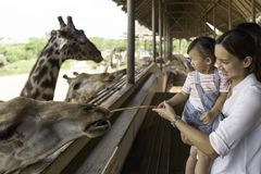 Asian cute baby girl feeding on your hand for big giraffe in animal farm background. Summer vacation holiday travel, family life style concept stock photo