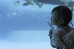 Asian cute child girl happiness looking fish and animal in the underwater sea. Family tourism concept background royalty free stock photos