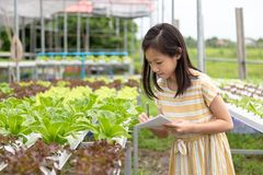 Asian cute girl is learning to grow organic vegetables in the fa royalty free stock photos