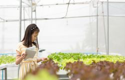 Asian cute girl is learning to grow organic vegetables in the fa stock photography